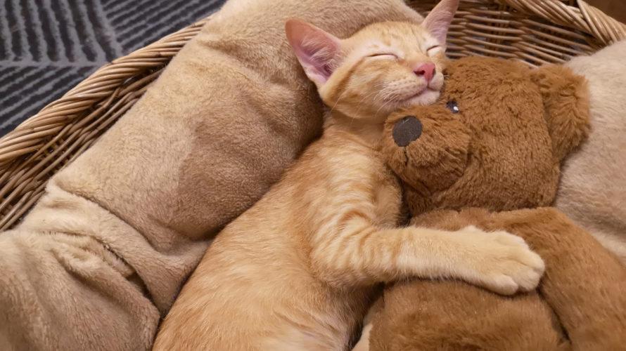 子猫が眠る画像